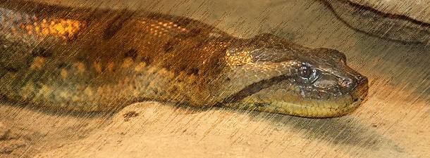 pokolenie_x_com_piton_aligator