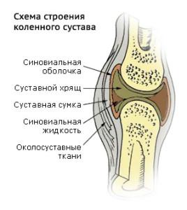 суставная ткань