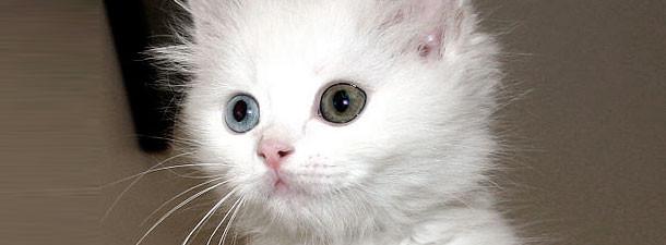 Обязанности кота