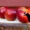 Лечебные свойства яблочного чая