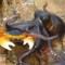 Битва краба и осьминога
