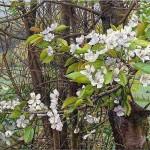 весна картины