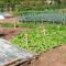 садовода-огородника