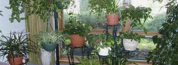 домашних растениях
